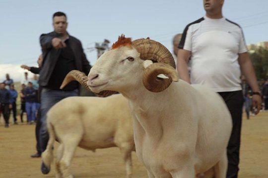 imgage mouton2