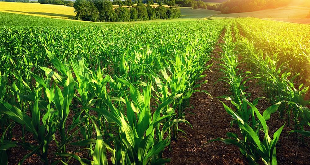 Foncier agricole : 500 000 hectares de terrain non exploités récupérés par l'Etat