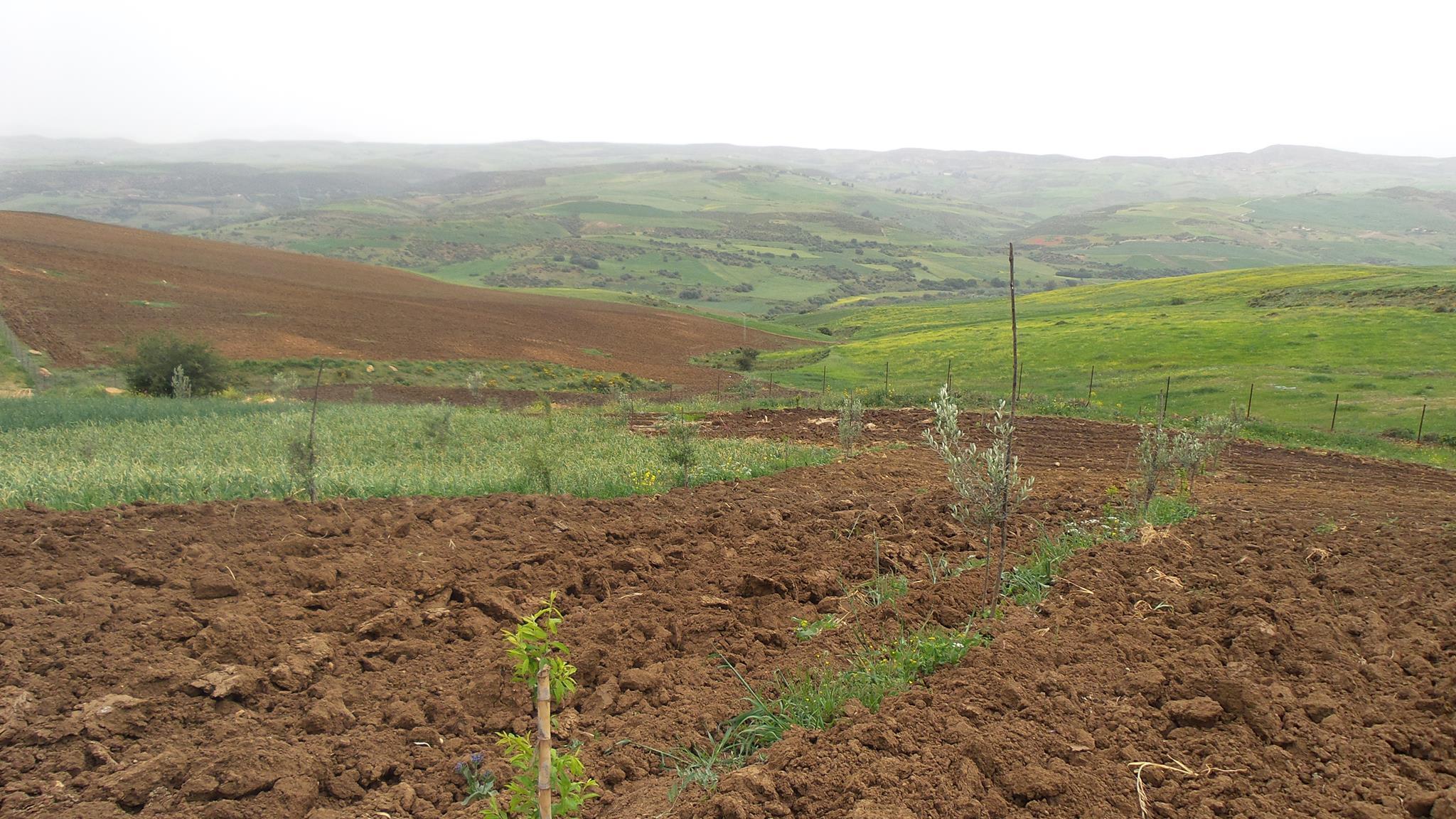 Agriculture : l'augmentation du prix de référence des engrais entrera en vigueur à cette date